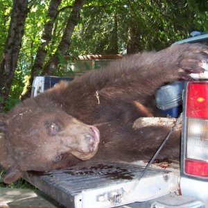 OR Damage Bear in Nissan