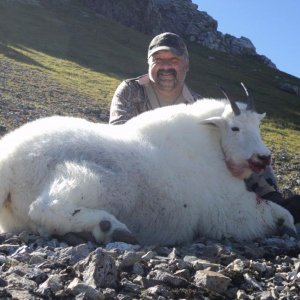 Kodiak, AK 2014 (Mountain Goat)