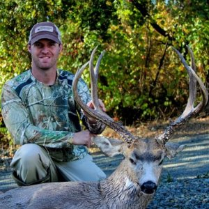 California blacktail
