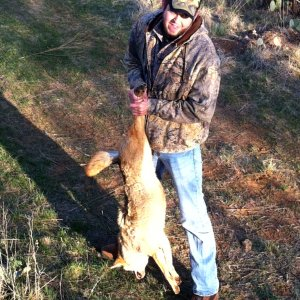 My 1st Coyote